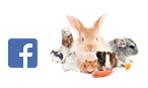 Consultez notre page Hagen Small Pet Care