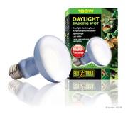 Ampoule à lumière du jour Exo Terra pour lézarder, R25, 100 W