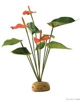 Plante tropicale Exo Terra, anthurium en buisson