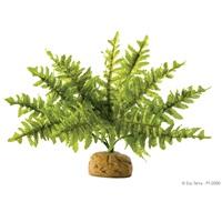 Plante tropicale Exo Terra, fougère de Boston, petite