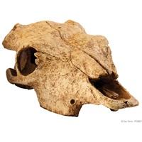 Crâne de bison Exo Terra, grand