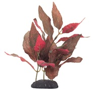 Alternanthera cardinalis EcoScaper Marina en soie, 20 cm (8 po)