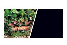 Arrière-plan réversible ClearView Marina, plantes vertes/noir uni, H. 45,7cm x L. 7,6m (18po x 25pi)