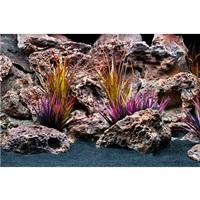 Arrière-plan réversible Marina, Flore de la jungle/Feuillage violacé, 30 x 60 cm (12 x 24 po)