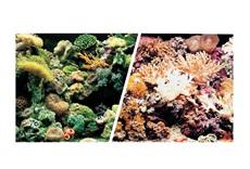 Arrière-plan réversible ClearView Marina, récifs marins/coraux, H. 45,7cm x 7,6m (18po x 25pi)