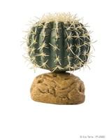 Plante désertique Exo Terra, cactus oursin