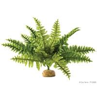 Plante tropicale Exo Terra, fougère de Boston, moyenne