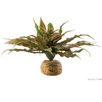 Plante désertique Exo Terra, cactus étoilé