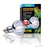 Ampoule halogène Exo Terra pour lézarder, 50 W
