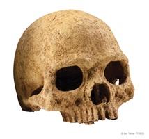 Crâne de primate Exo Terra, grand