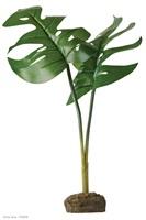 Plante ornementale Exo Terra, philodendron