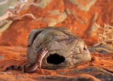 Grotte Exo Terra pour geckos, moyenne
