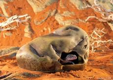 Grotte Exo Terra pour geckos, grande