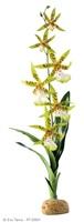 Plante tropicale Exo Terra, arachnis flos-aeris
