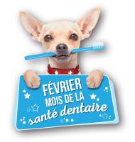 Par ailleurs, assurez-vous d'utiliser une brosse à dents et de la pâte à dents conçues pour les animaux de compagnie.