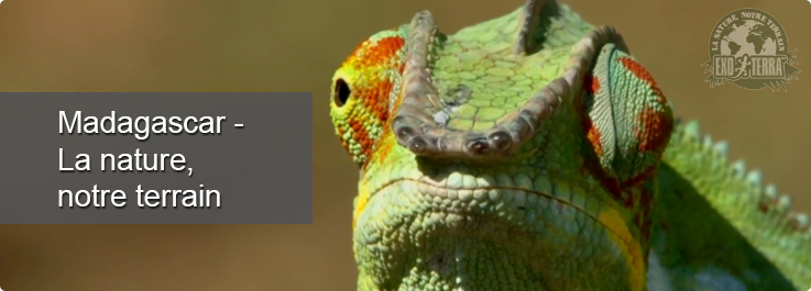 Madagascar - La nature, notre terrain
